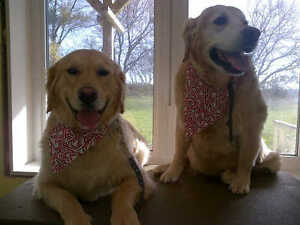 Full Service Dog Grooming serving Kitchener-Waterloo and Wilmot