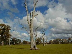 Dead Tree's, fallen or standing. Rutherford Maitland Area Preview