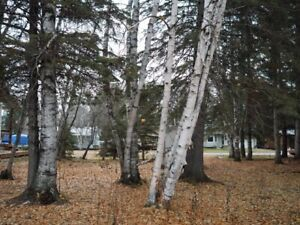 Madge Lake -LOT for sale