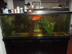 Aquarium 130g Toute équipé décante poissons négo