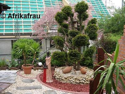 Betondielen und Beton - Baumstammscheiben in Holzoptik durchziehen die Kiesbette und laden zum wandeln im Garten ein.