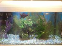 COLDWATER AQUARIUM AND FISH AND WEED etc Bargain Ideal for a beginner