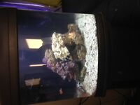 29 Gallon JBJ Nano cube Saltwater Includes stand!!!