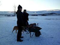 Experienced dog walker / animal handling