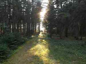 5 acres land for sale