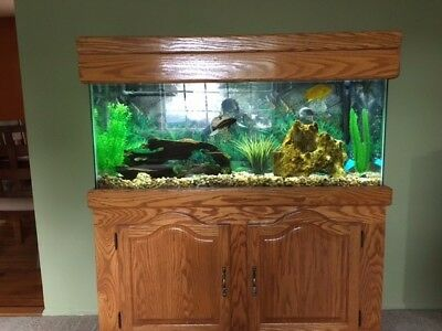Fish Tank Aquarium 55 gallon, Oak Stand, Hood, Filter + extras. Local pick up