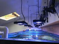 Marine Aquarium equipment for sale