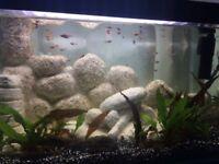 Beautiful Aquarium/Fish Tank 70L Complete Setup with Stand