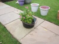 Vintage Enamel Preserve Pan jam flower pot bucket trough bucket