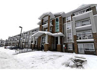 Immaculate condo in South Terwillegar available May 15