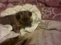 7 week old jug pup