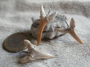 Diente-de-tiburon-natural-1-solo-colgante