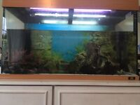 120 litre fish tank complete with pump rocks fish etc ...great condition