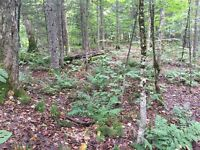Beautiful lot with river access  in Lac Supérieur Laurentides Québec Preview