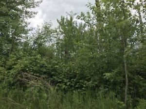 WELL TREE'D LAKEFRONT LOT STURGEON LAKE $100,000