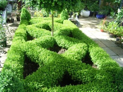 BOWRAL BOX HEDGING (Box Hedging Varieties) Bowral Bowral Area Preview