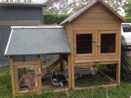 Netherland Dwarf for sale with or without cage Crafers Adelaide Hills Preview