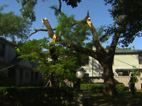 Limbing/Tree Removal/Insured/Free Quotes