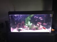 Fluval Roma 200 with all tank accessories