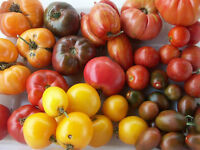 40 plus Heirloom tomato varieties / semis de tomates
