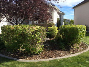 AFFORDABLE TREE PRUNING AND HEDGE TRIMMING London Ontario image 3
