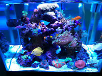 Complete Reef/Coral Set Up (40 Gallon Oceanic Tank)!!!