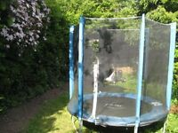 Plum 6ft Trampoline