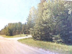 2 Lush  Lots Just Waiting for Your DREAM HOME!