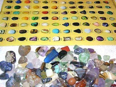Rock & Mineral educational find sort & identify kit with picture chart