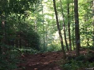 Brébeuf, terre 52 arpents (44 acres) à 10 minutes de Tremblant