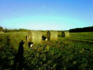90-800 lb round bales suitable for Cattle, Sheep, Goats Llama
