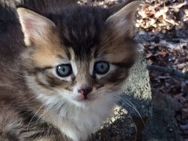 EXPRESSIVE KITTEN COLOR RESCUE PHOTO HELPS FEED PAY VETERINARY COSTS NON-PROFIT
