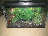 10 GALLON TANK WITH ACCESSORIES