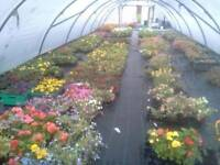 Flowers for sale great prices