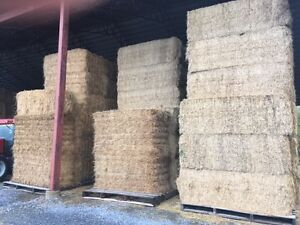 Horse and dairy hay for sale Cornwall Ontario image 1