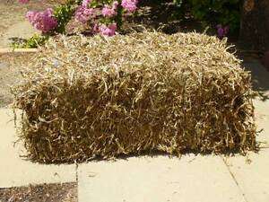 Pea Straw Bales Perth Perth City Area Preview