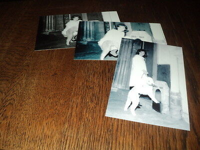 SHEILA LOT DE PHOTOS FORMAT 10*15 N&B - THEME 039 DOGS BAR - 3 PRISES
