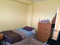Cosy Twin room to share near Putney Heath