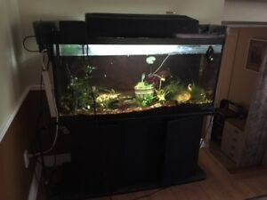 4ft Fishtand and stand