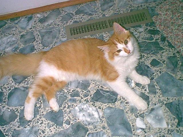 cats_meow_antiques_cat_rescue