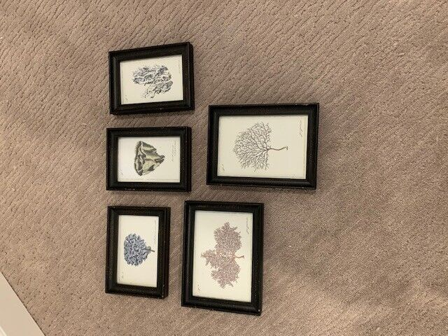 Pottery Barn Set Of Framed Art Pictures Home D 233 Cor