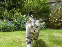 *****MISSING CAT******