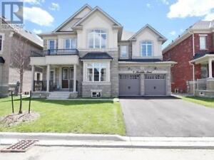 9 HERTONIA ST Brampton, Ontario