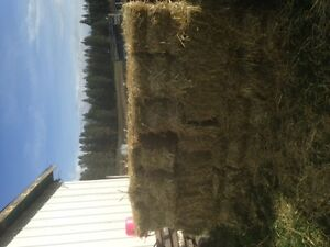 Straw, small square bales