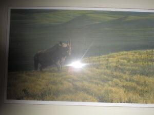 Bateman Rhinos