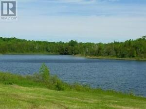 A Tranquil Oasis minutes from Lucknow Kitchener / Waterloo Kitchener Area image 5