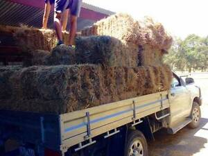 HAY BALES - Small Squares - FRESHLY CUT this SEASON Narre Warren North Casey Area Preview