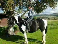 Genuine pony for sale