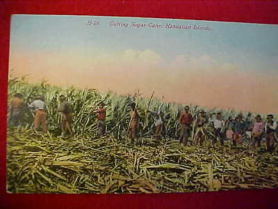 VERY OLD COLOR PC - CUTTING SUGAR CANE, HAWAIIAN ISLANDS  #H-26