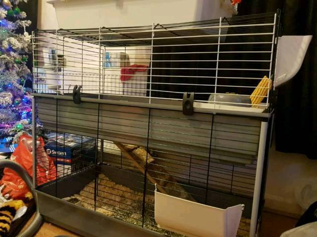 what size cage should i get for two guinea pigs